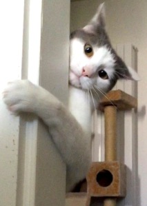 catmo-cat-arm